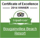 bougainvillea tripadvisor 2014